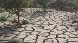 The long drought that followed the floods has left the earth parched (Photo: Joe Dyke/IRIN)