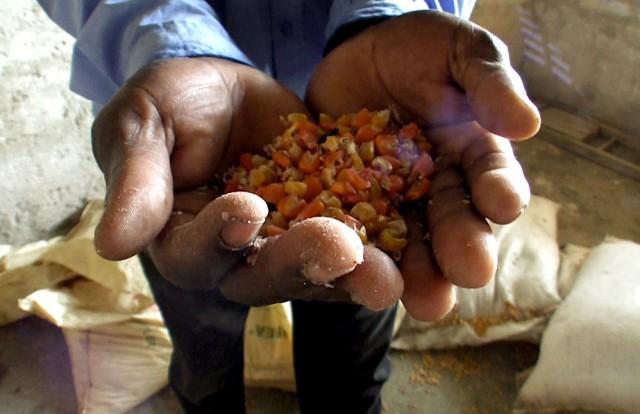 ON HAITI   Did Monsanto want to take advantage of the earthquake to invade the Haitian market?